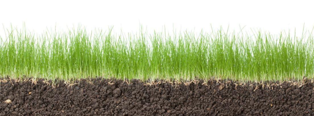 Cuándo están podridas las raíces de mi planta