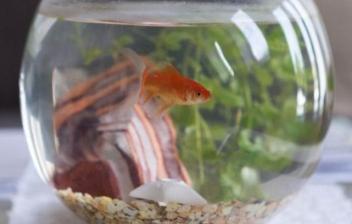 Consejos para tener peces en casa