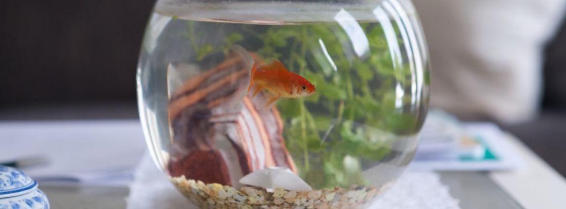 Cómo cuidar a tus peces en casa