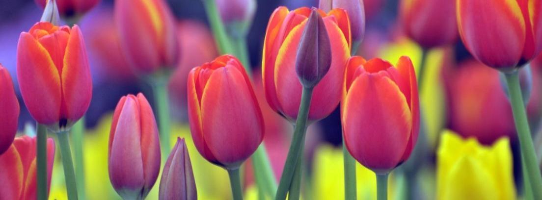 Listado de las flores más bonitas