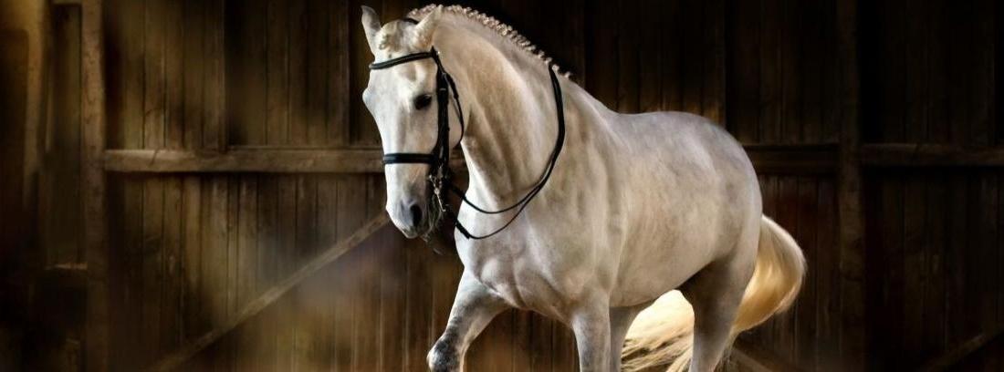 El caballo andaluz