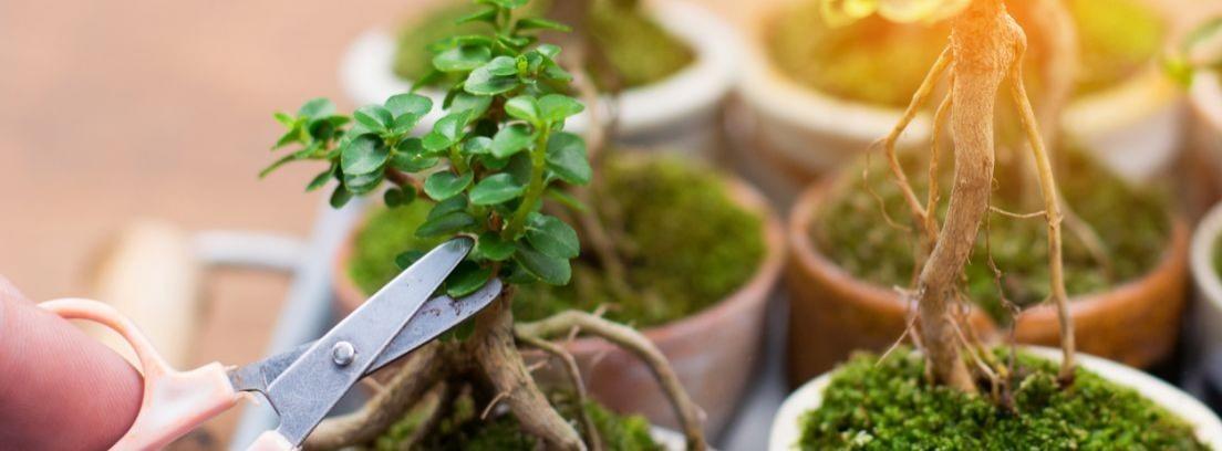 Herramientas para cuidar bonsái