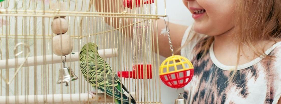 Cómo elegir jaula para los canarios
