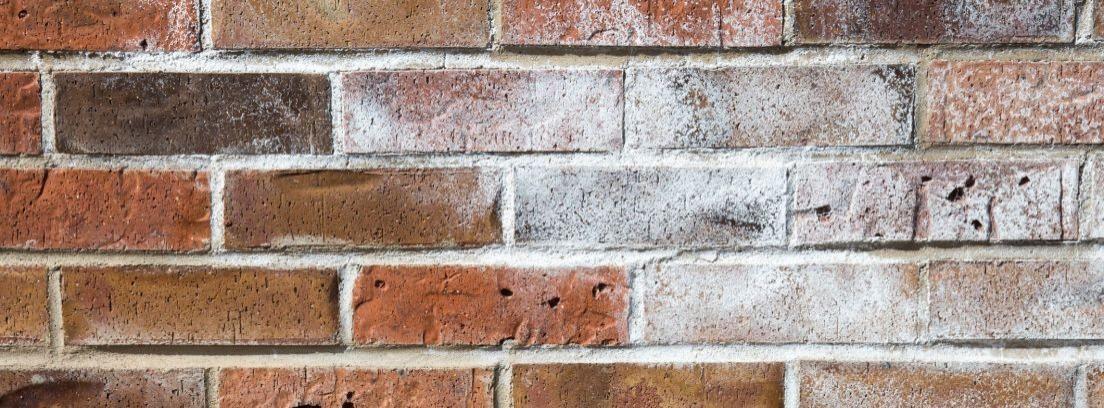 Eliminar el salitre de las paredes de ladrillo -canalHOGAR