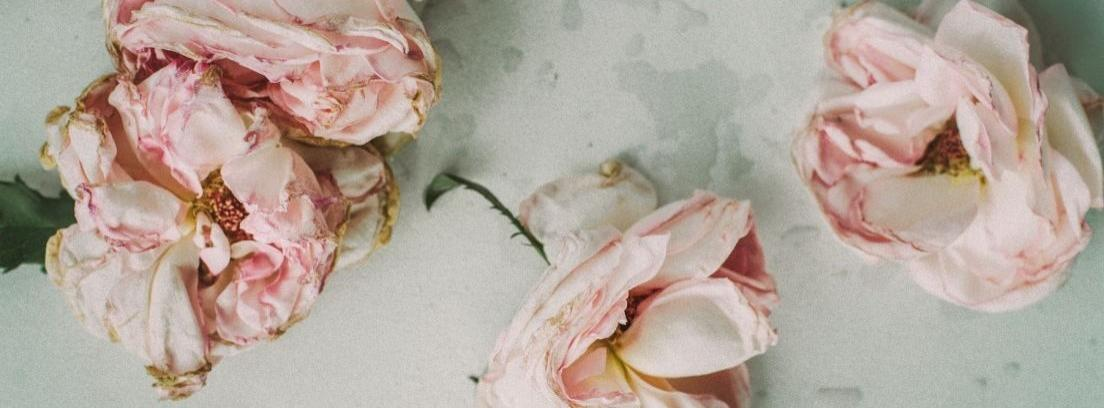 Rosas secas sobre un retal de tela y unas tablas de madera