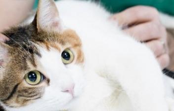 Problemas respiratorios gatos