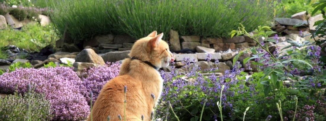 Gatos jardín