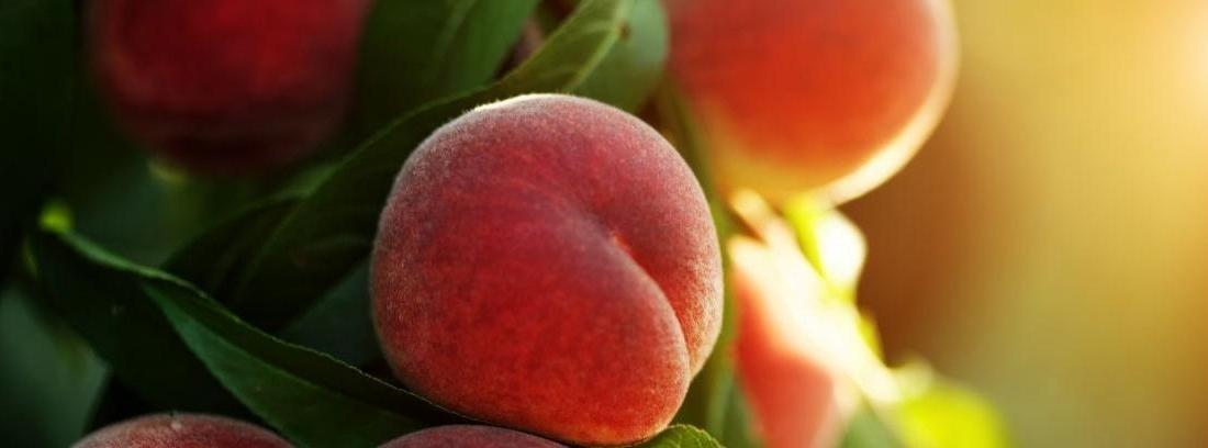 Enfermedades en árboles frutales