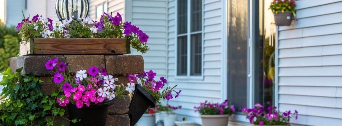 Descubre las flores más coloridas para decorar tu porche
