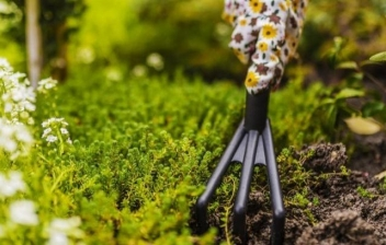 Flores low cost para tu jardín