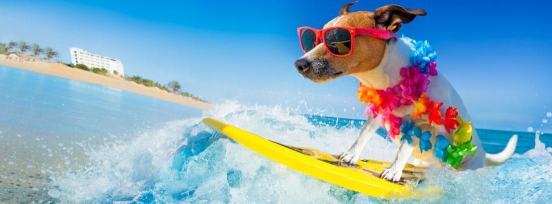 Gafas protectoras para perros