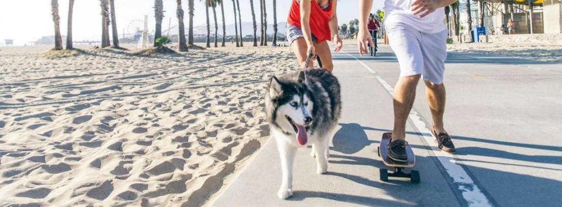 Husky paseando en un paseo marítimo