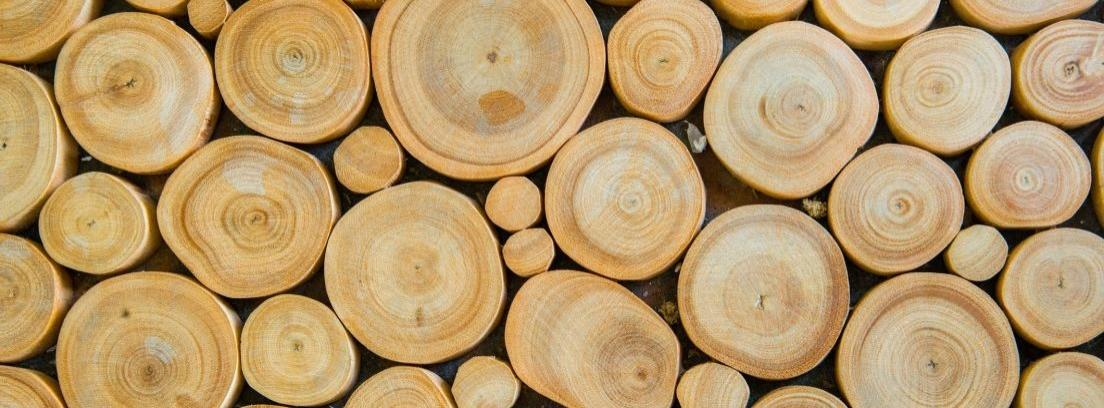 Vista cenital de rodajas de troncos de diferentes tamaños
