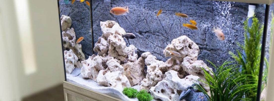 Ideas para decorar un acuario para peces