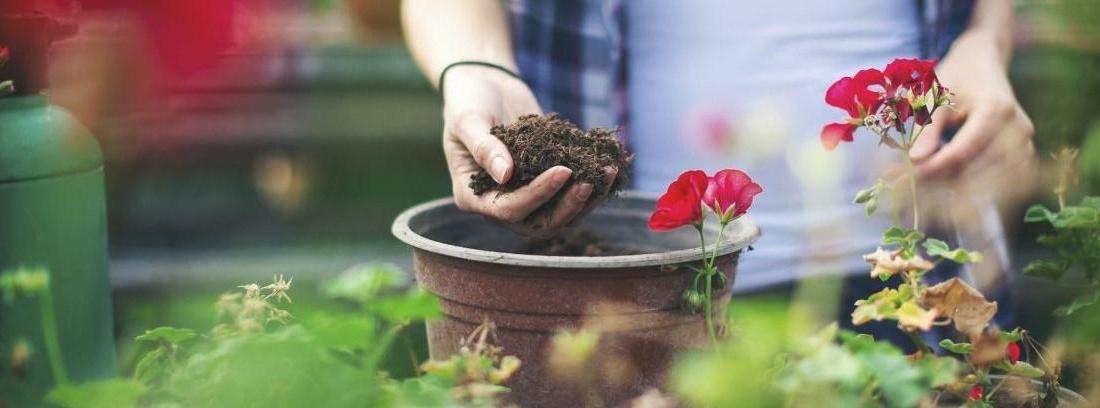 eligiendo una planta