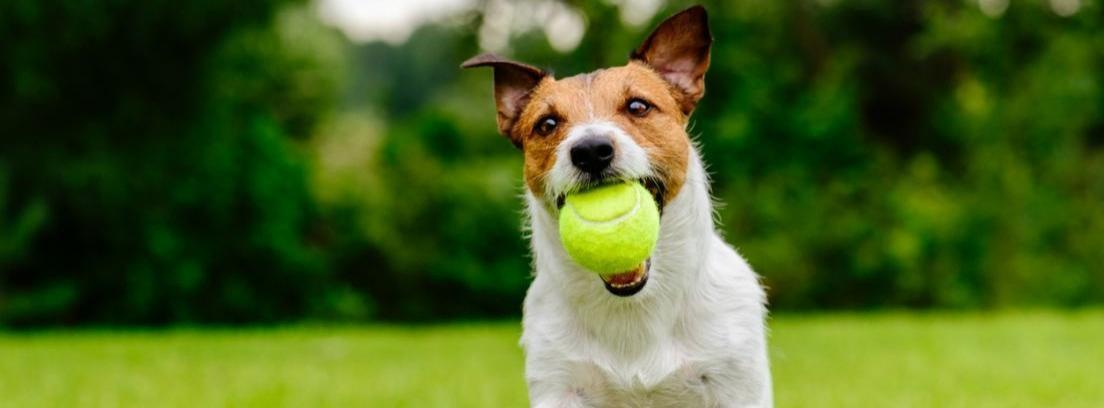 Cachorro de perro tumbado muerde una pelota rosa y blanca