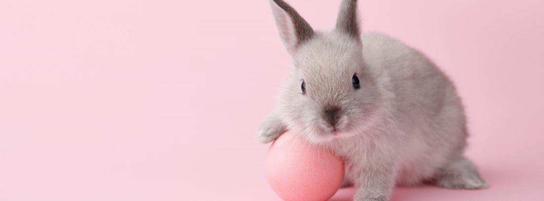 La importancia de dar juguetes a los conejos