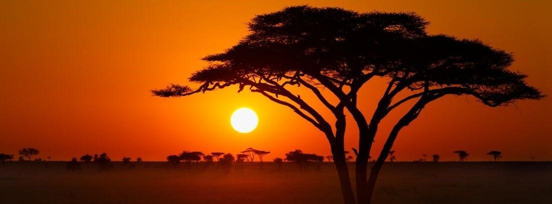 La acacia, un árbol ideal para el jardín