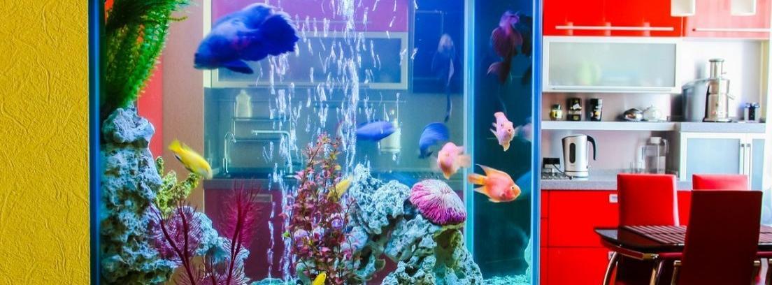 Luces para acuarios