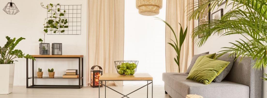Elige la mejor planta para tu salón