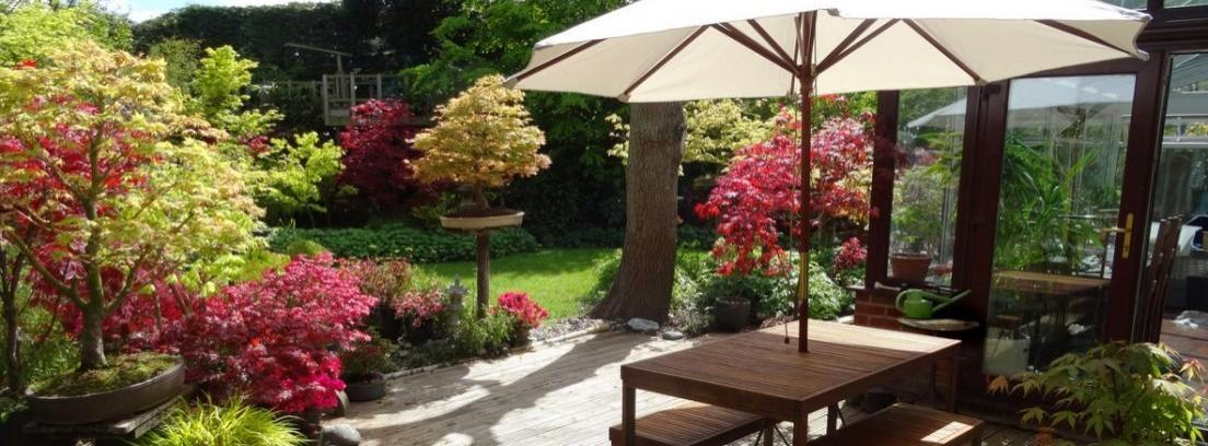 Las mejores plantas para tu terraza cubierta