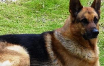 Las razas de perros más fieles del mundo