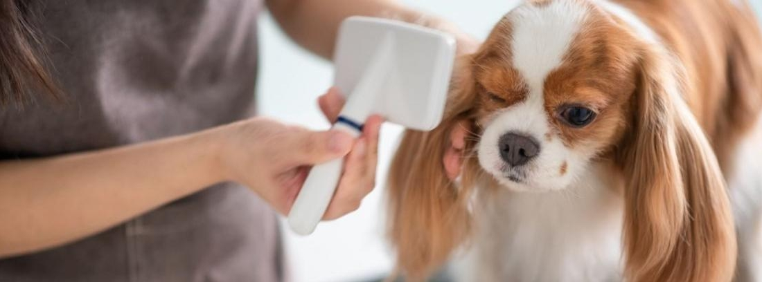 Limpiar los peines de mascotas