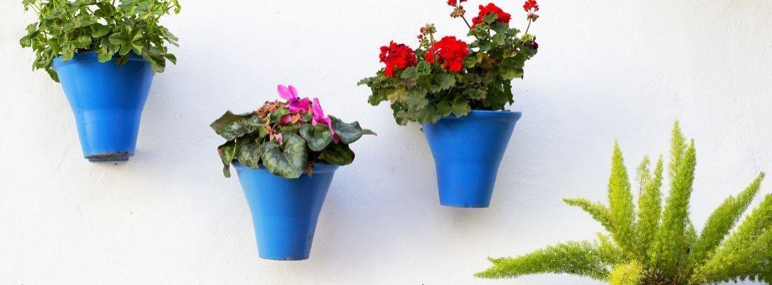 Cuida tus plantas con las macetas autorriego