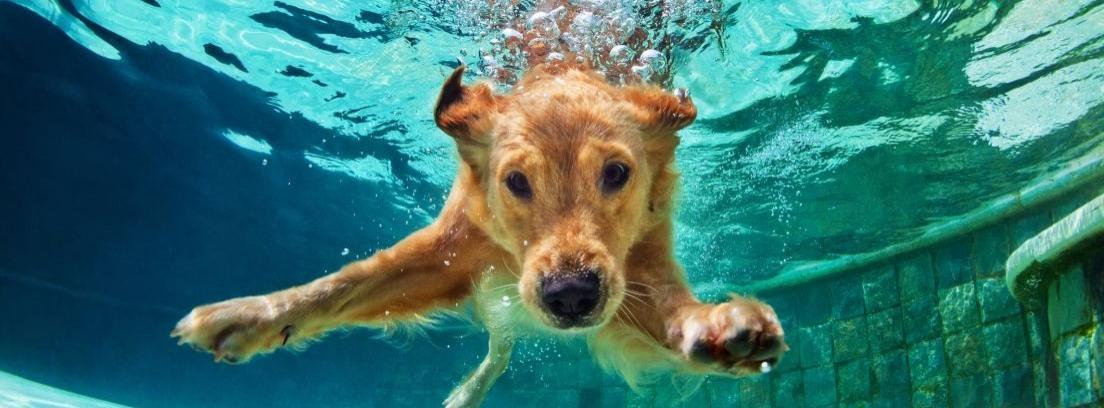 mascota mojada