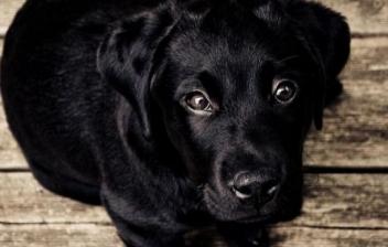 Normas de convivencia con mascotas en una comunidad