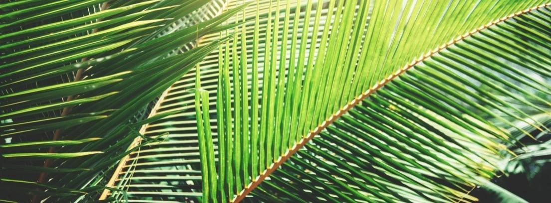 Plantar palmeras en el jardín