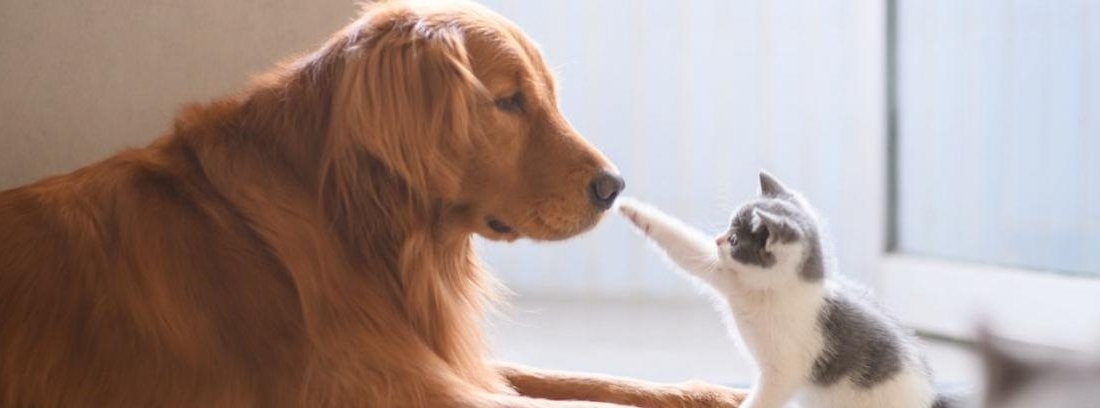 Un gato y un perro miran a un lado