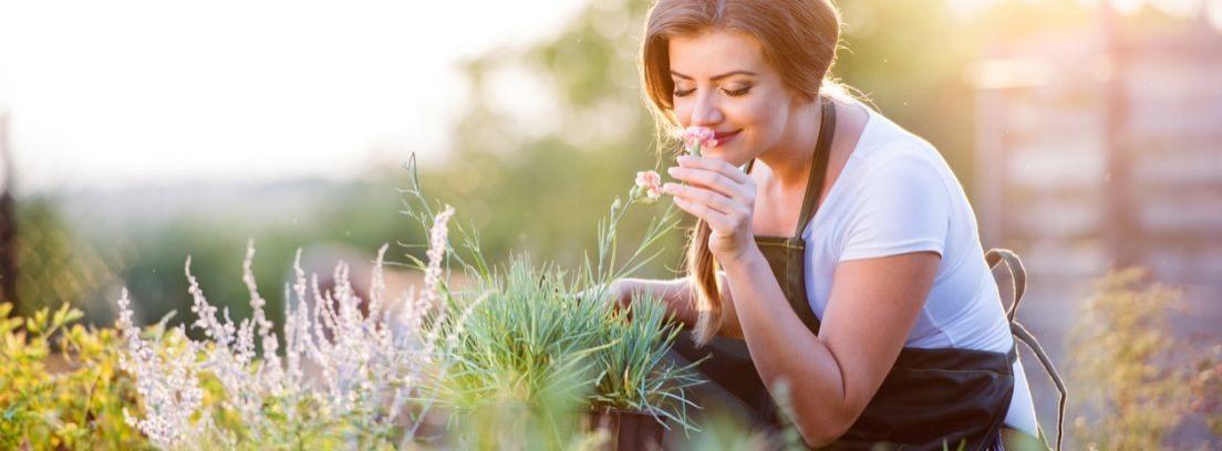 Plantas aromáticas para perfumar tu jardín en verano