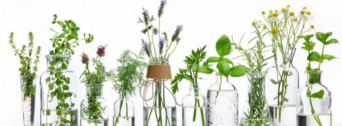 Botellas de cristal con hierbas de salvia