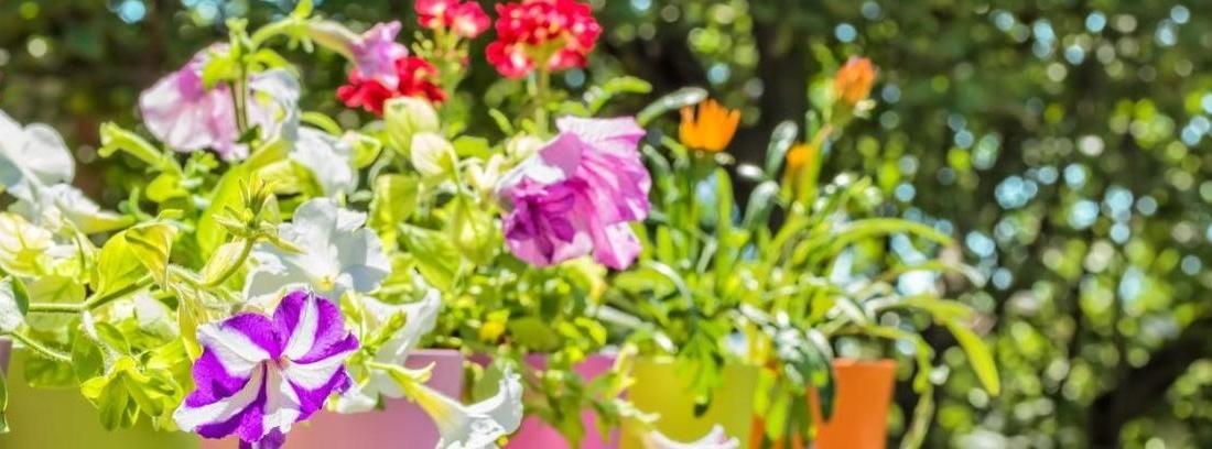 Las mejores plantas con flor que resisten al calor