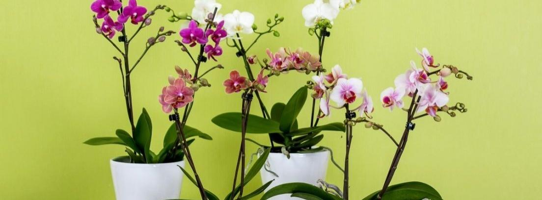 plantas en ático