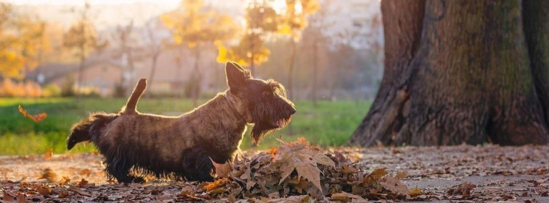 Por qué los perros marcan territorio con el pis