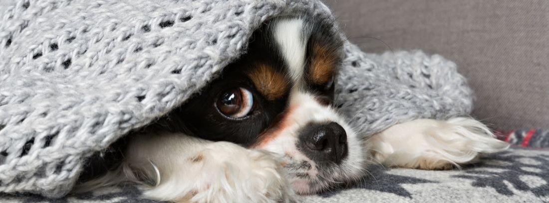 Temblor perros