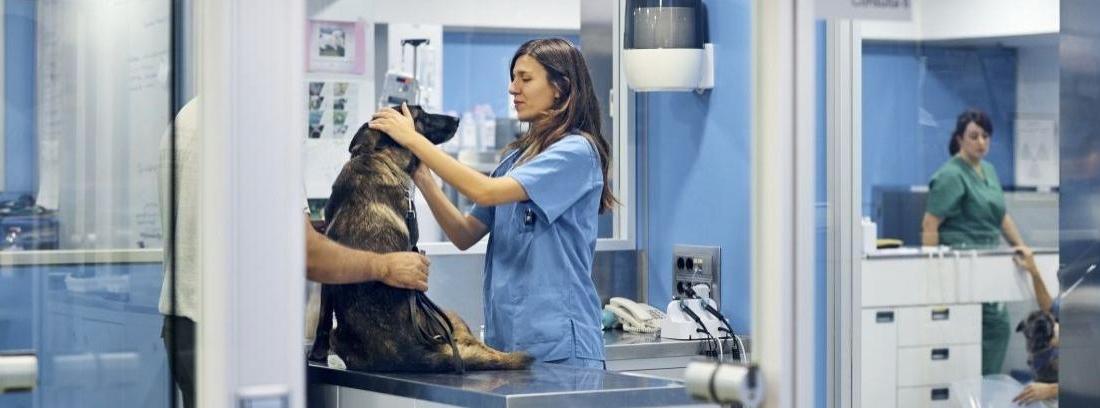 Preparación de un perro para una operación
