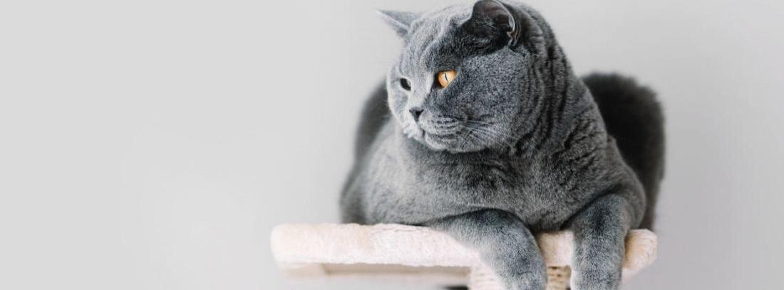 Cómo hacer arañadores caseros para gatos