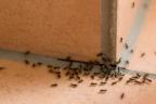 Hoja llena de hormigas