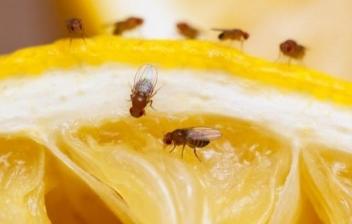 remedios caseros para acabar con las moscas