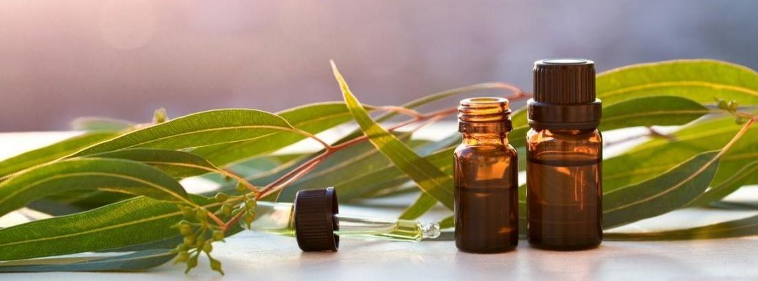 Remedios caseros para ahuyentar a los insectos canalhogar - Ahuyentar moscas exterior ...
