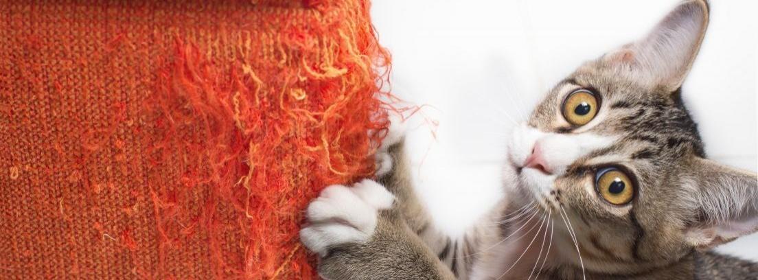 Cómo hacer repelente casero para gatos