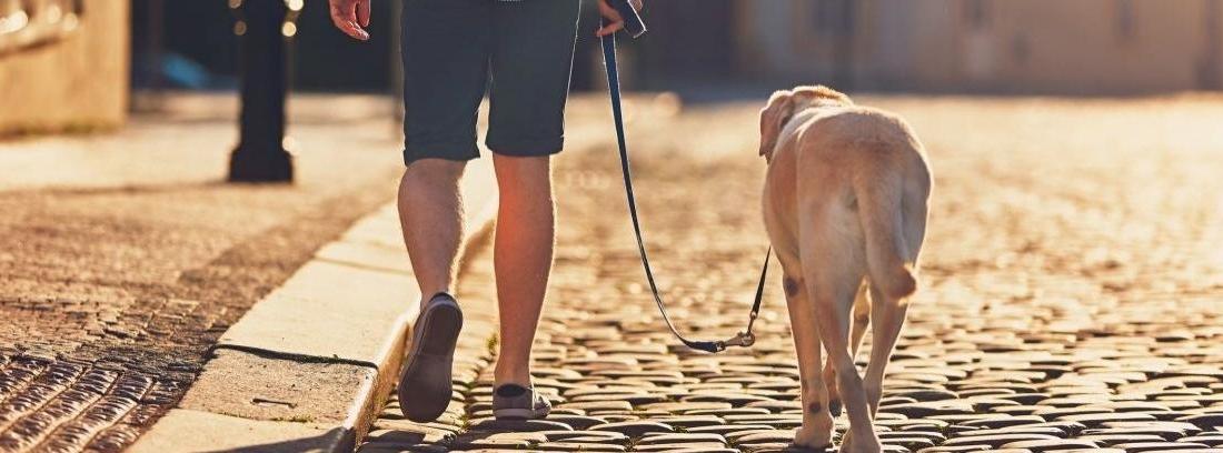 Un hombre con un perro al aire libre