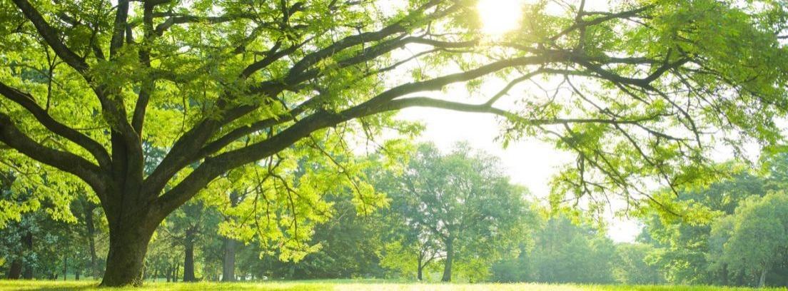 Tipos de árboles para el jardín