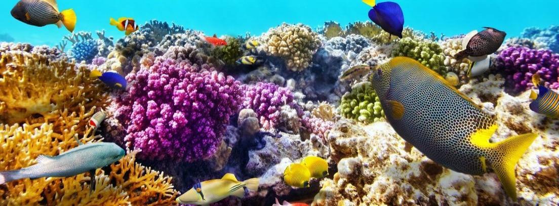 Pon un coral en el acuario