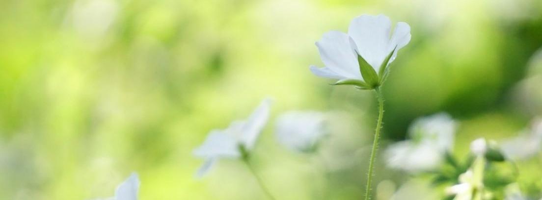 Flores según su forma
