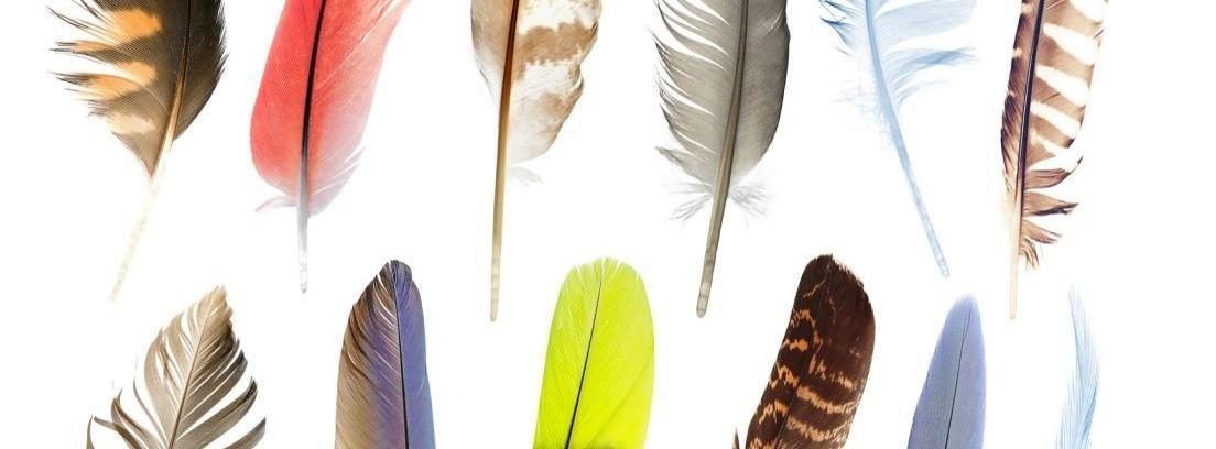 Diferentes tipos de plumas en las aves