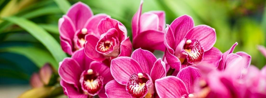 Tipos y cuidados de las orquídeas